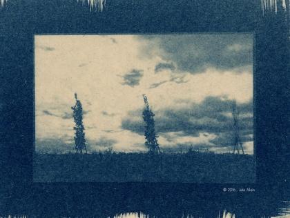 Battement végétal - Cyanotype